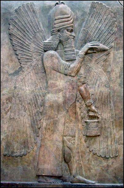 sumerian-pine-3